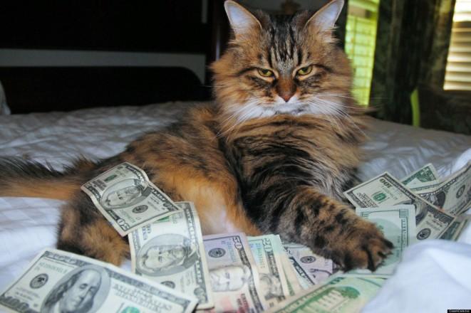 catsnmoney